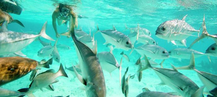Retire Belize_Snorkel