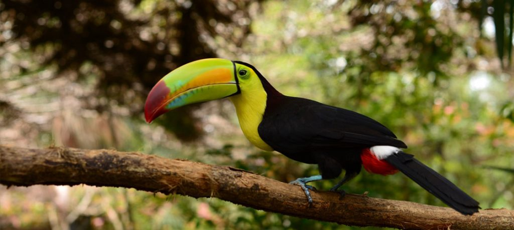 Retire Belize_Belize Zoo